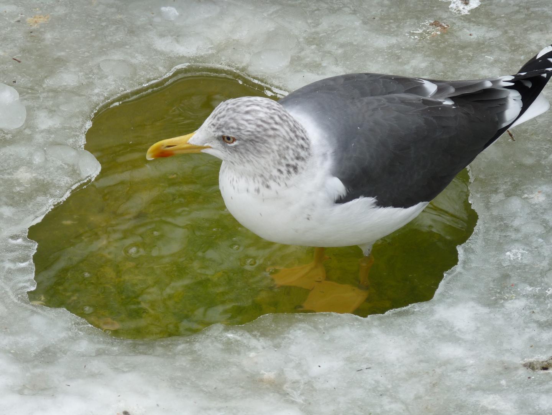 Bain de pieds hivernal