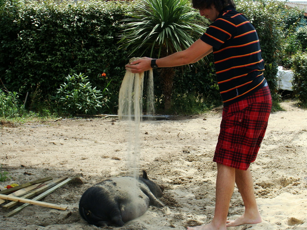 bain de sable pour le cochon viet!
