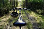 balade à vélo en forêt!!