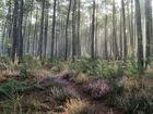 balade en forêt !
