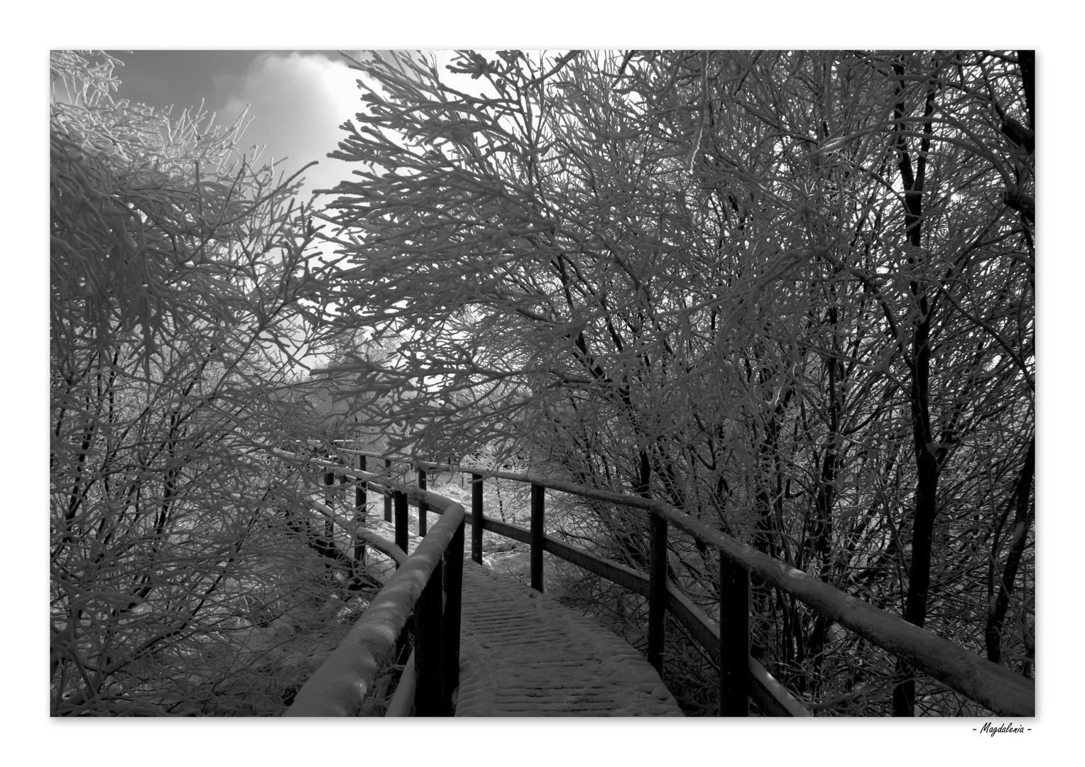 Balade en noir et blanc