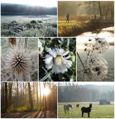 Balade matinale à Aiseau (Belgique)