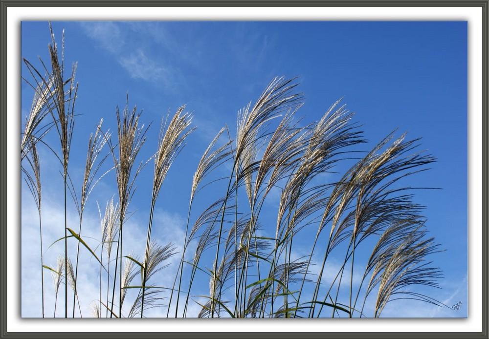 Balayé par le vent