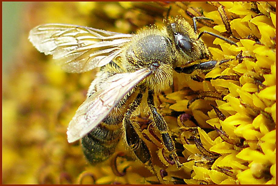 Bald gibt es neuen Honig!