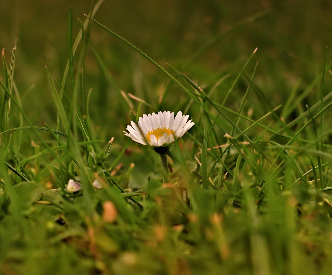 Bald ist diese kleine Blume ...