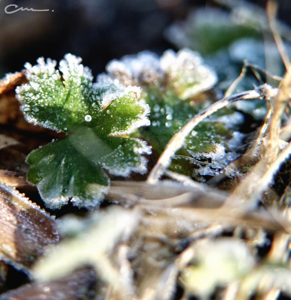 -bald kommt der Frühling-