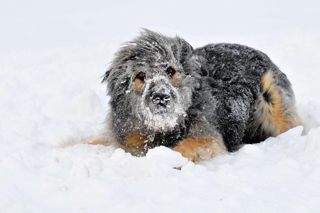 Bald kommt er Schnee zurueck...