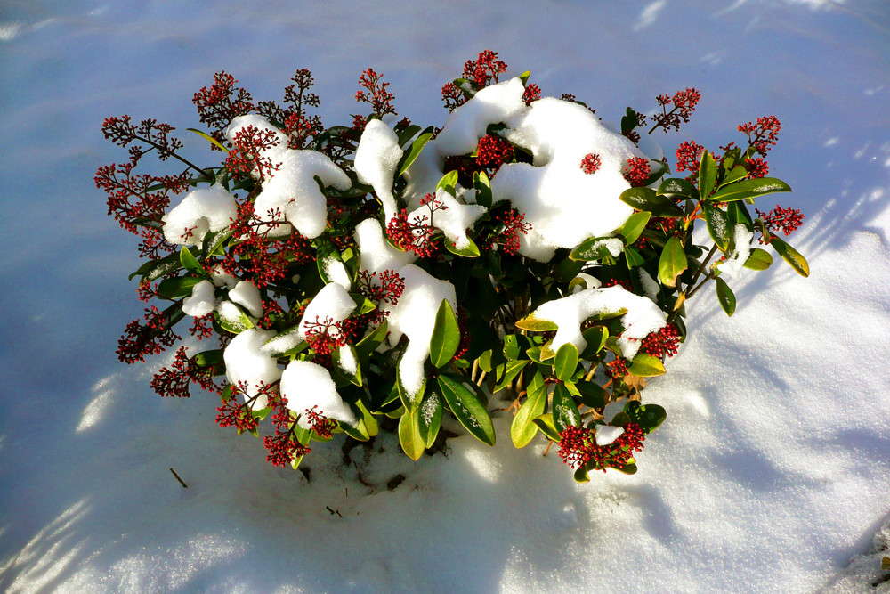 Bald vom Schnee befreit