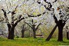 Baldachin aus Blüten