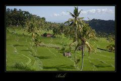 Bali 2009 *10