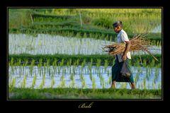 Bali 2009 *11