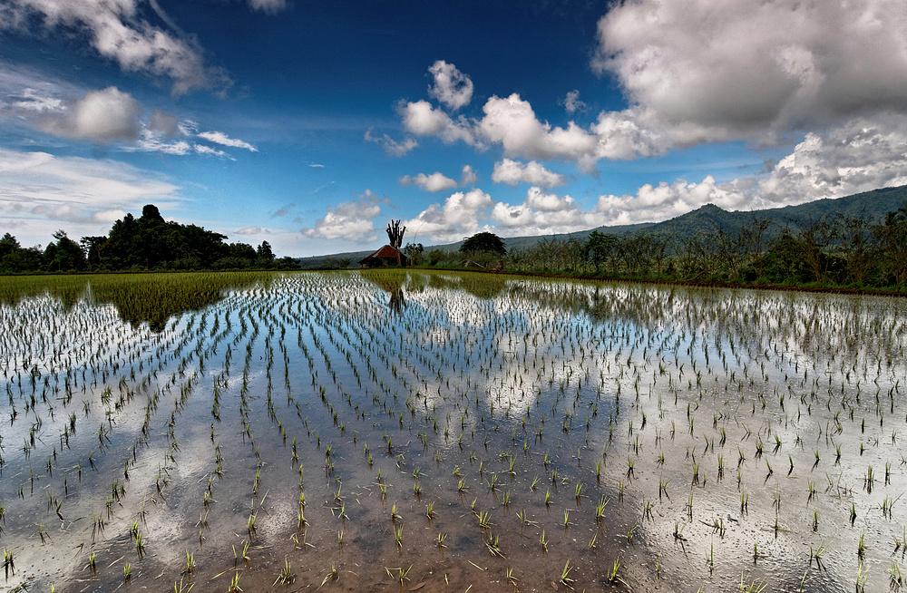 Bali - Landschaft