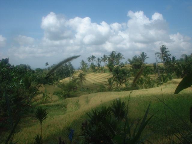Bali may05