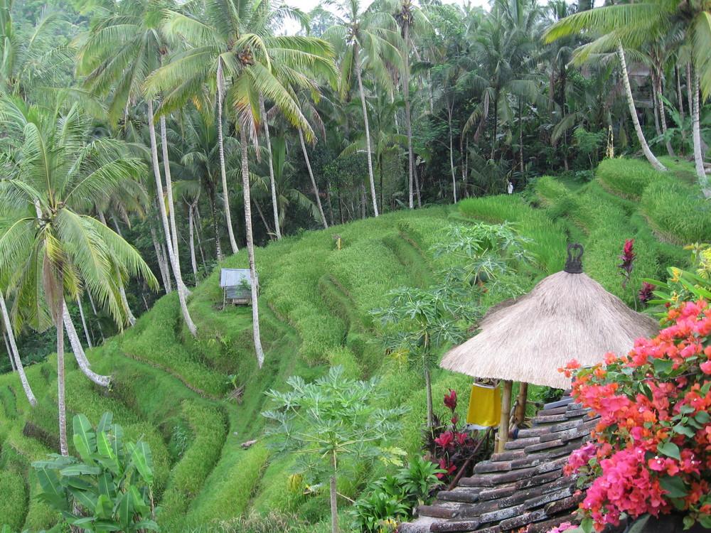 Bali: Reisterrassen bei Ubud