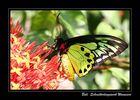 Bali - Schmetterlingspark
