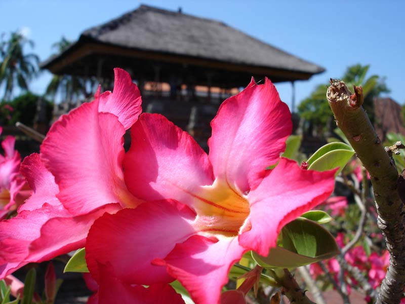 Bali, Tempelanlage