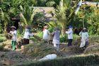 Balinaises au travail du riz