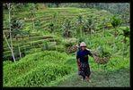 Balinesischer Reisbauer