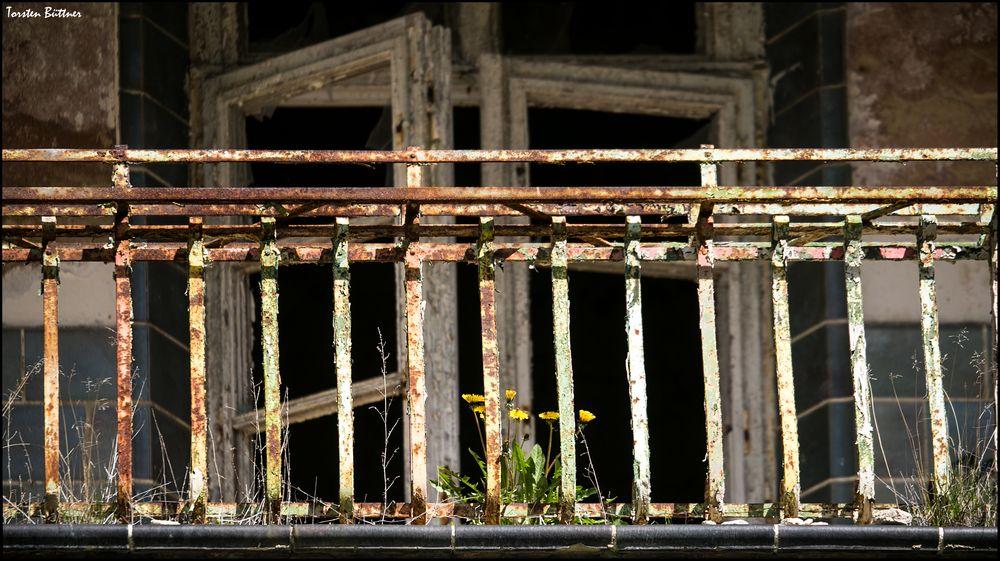 Balkonblümchen