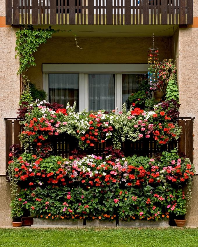 balkonblumen foto bild pflanzen pilze flechten bl ten kleinpflanzen gartenpflanzen. Black Bedroom Furniture Sets. Home Design Ideas
