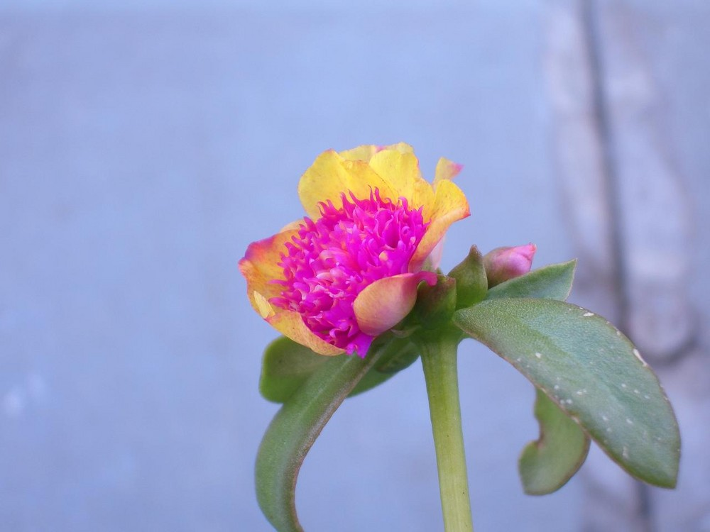Balkonflora ;o)