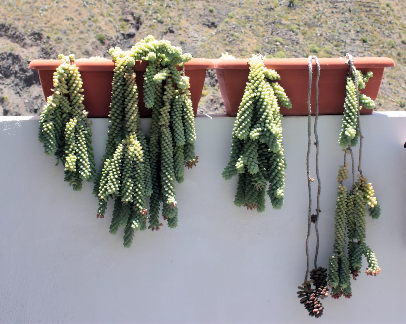 Balkonkastenbepflanzung