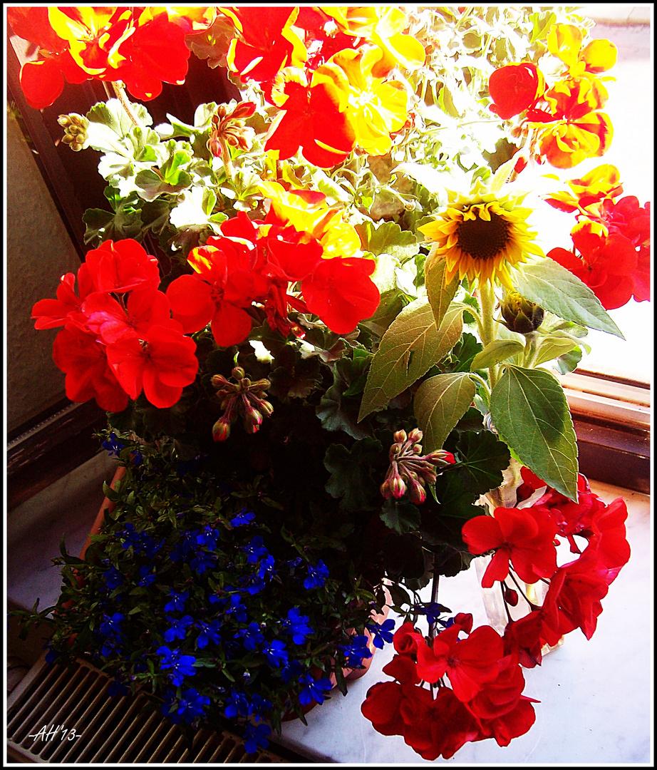 Balkonkastenblüte zum 2ten