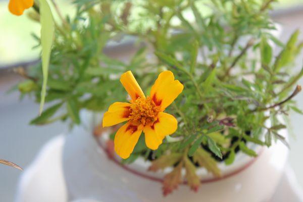 Balkonpflanze #9