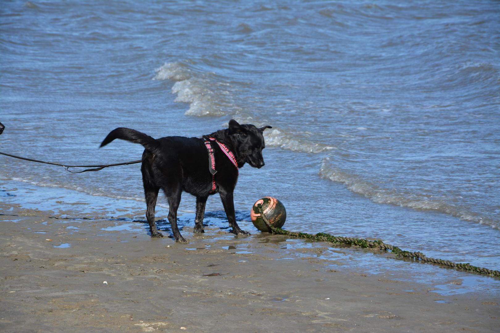 Ball??