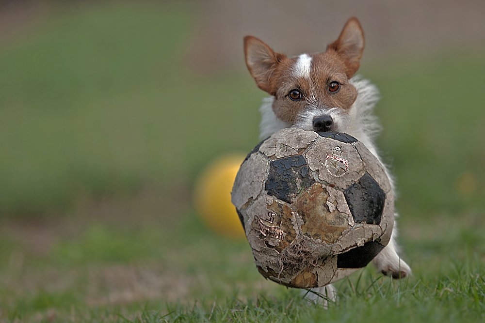 *Ball*