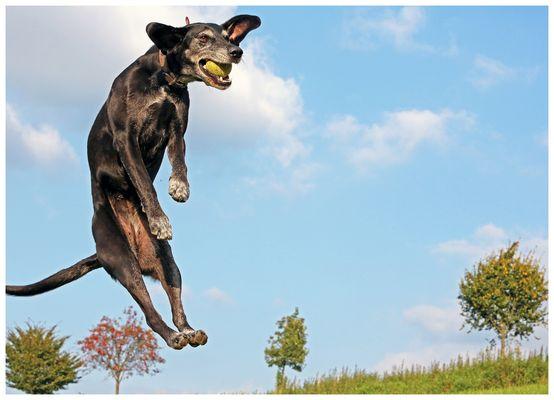 Ball begegnet Hund