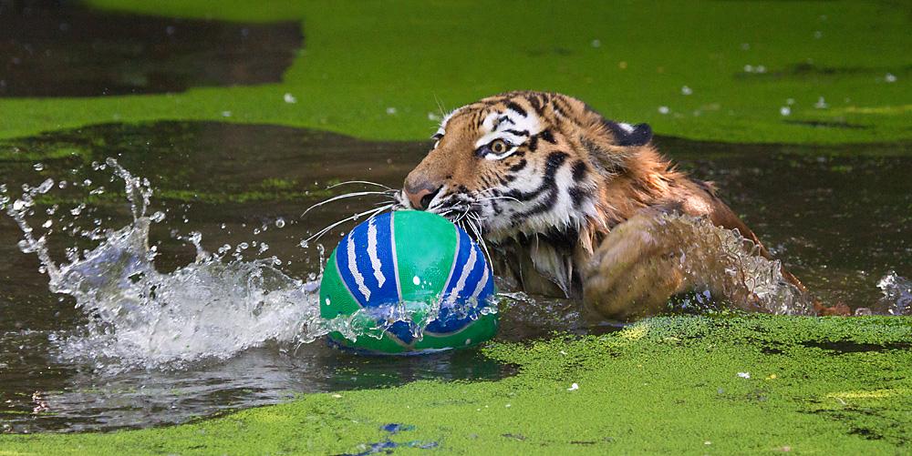 Ball fixiert
