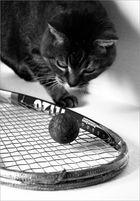 Ball im Fokus
