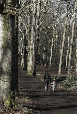 ballade dans les bois thuin