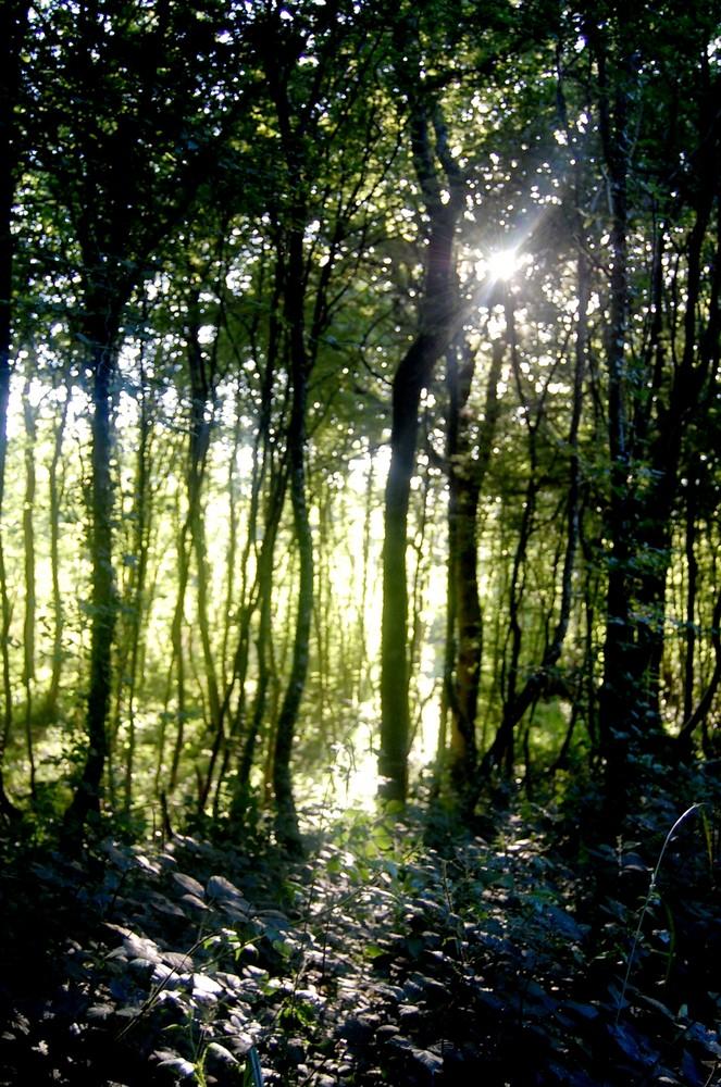 """ ballade en forêt """