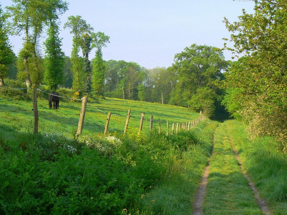 Ballade verte près de la maison
