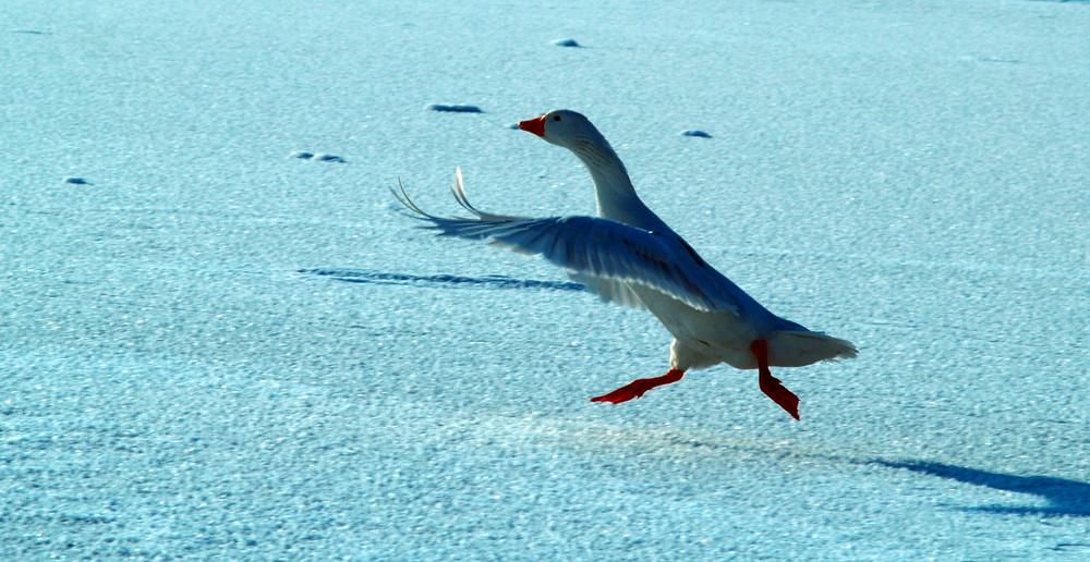 Ballerina auf Eis