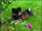 Balou - 8 Wochen alt