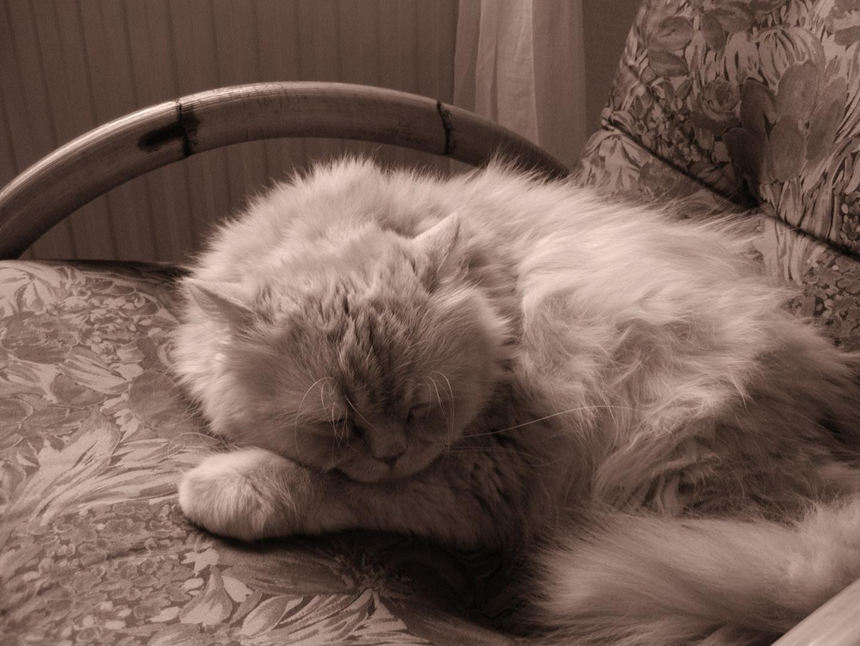 Balou The sleeping bear