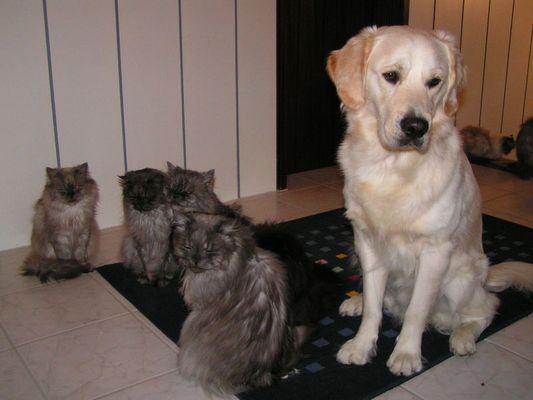 Balou und seine Freunde