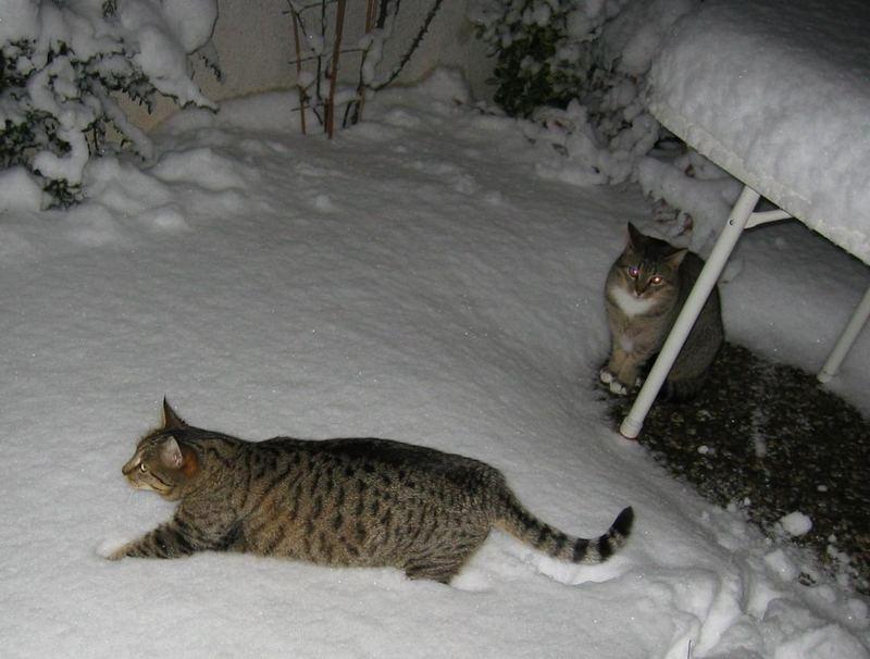 Balou und Tiger im Schnee
