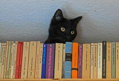 Balthasar und mein Bücherregal