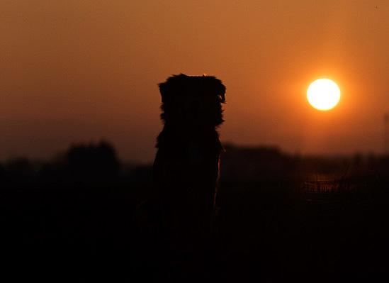 Balu-Silhouette bei Sonnenuntergang