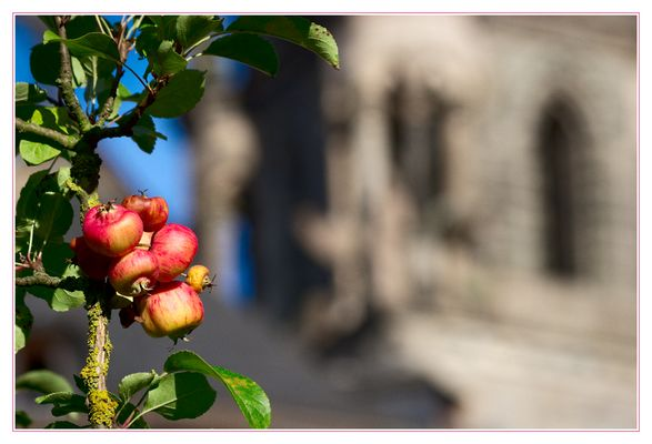 Bamberger Dom-Äpfel