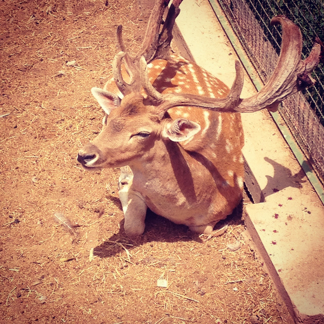 Bambi in the zoo