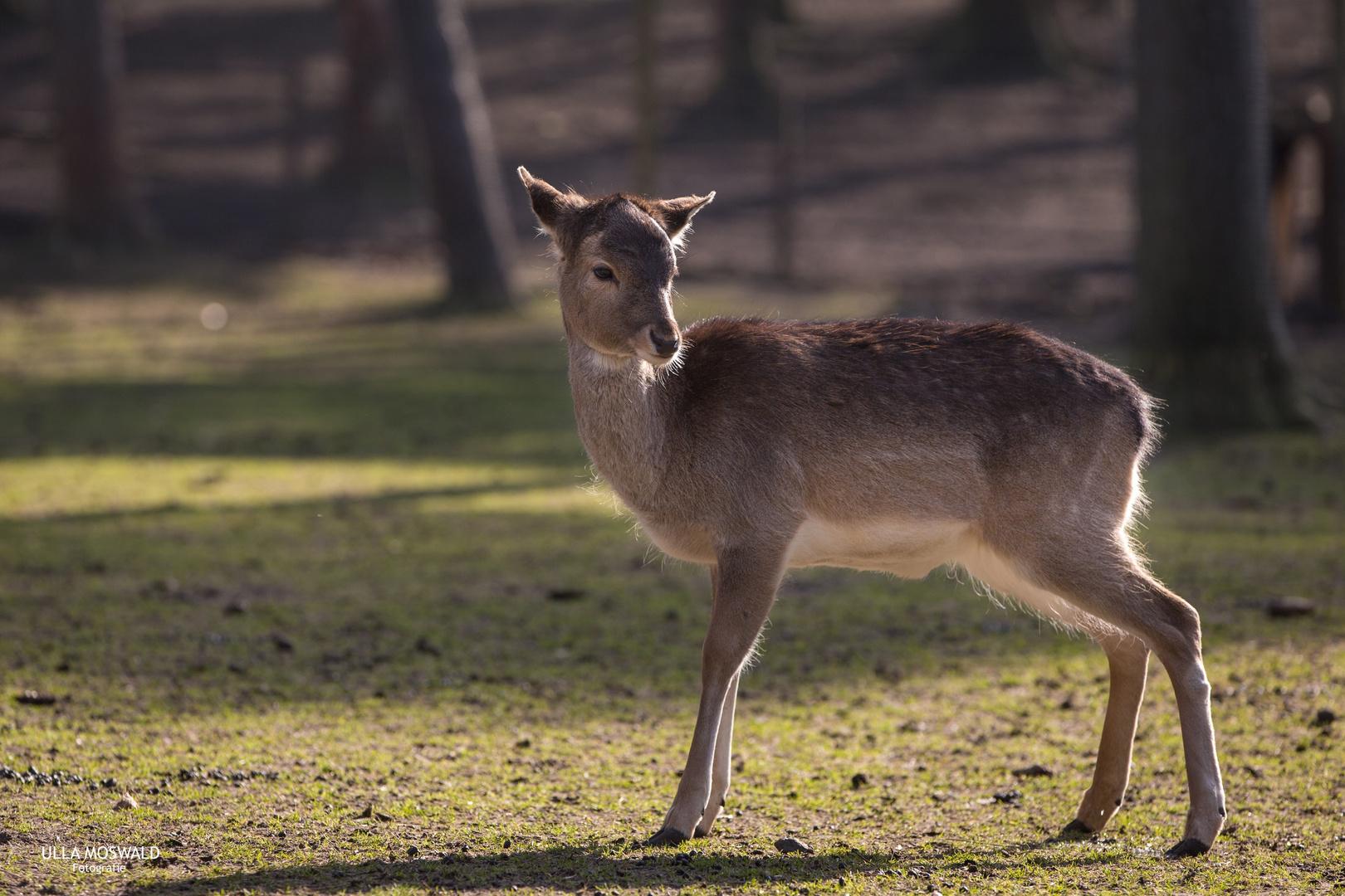 ...Bambi lebt...