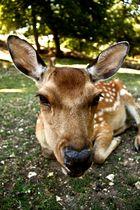 Bambi, mal ganz nah!