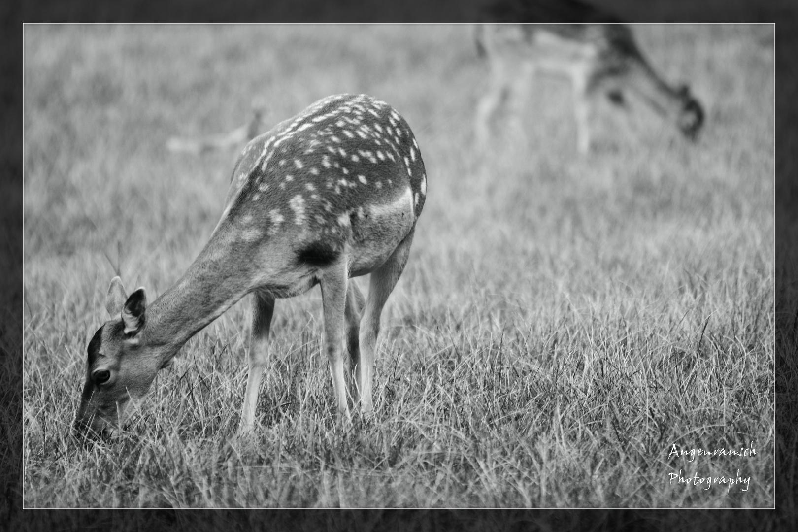 bambi xD