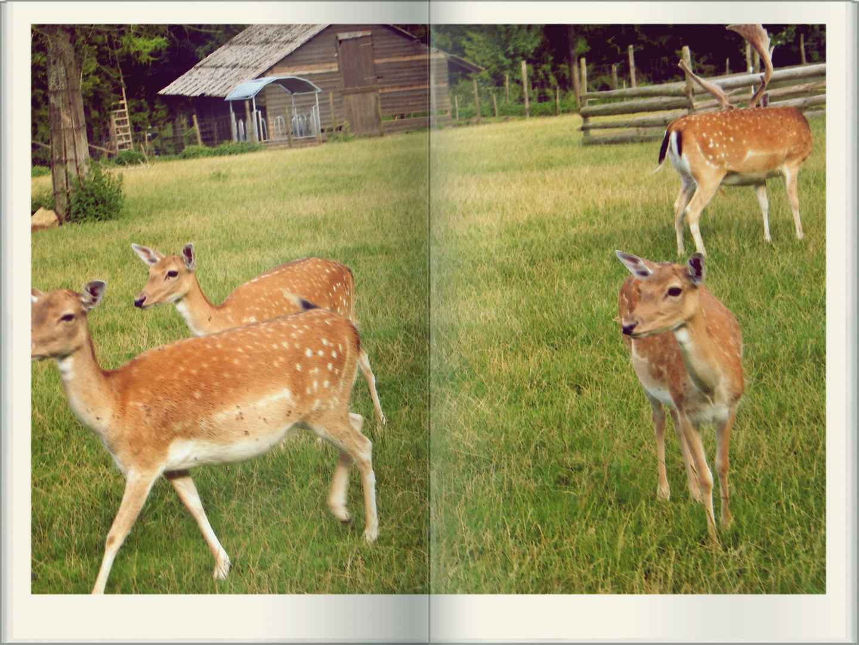Bambi,eigene Version
