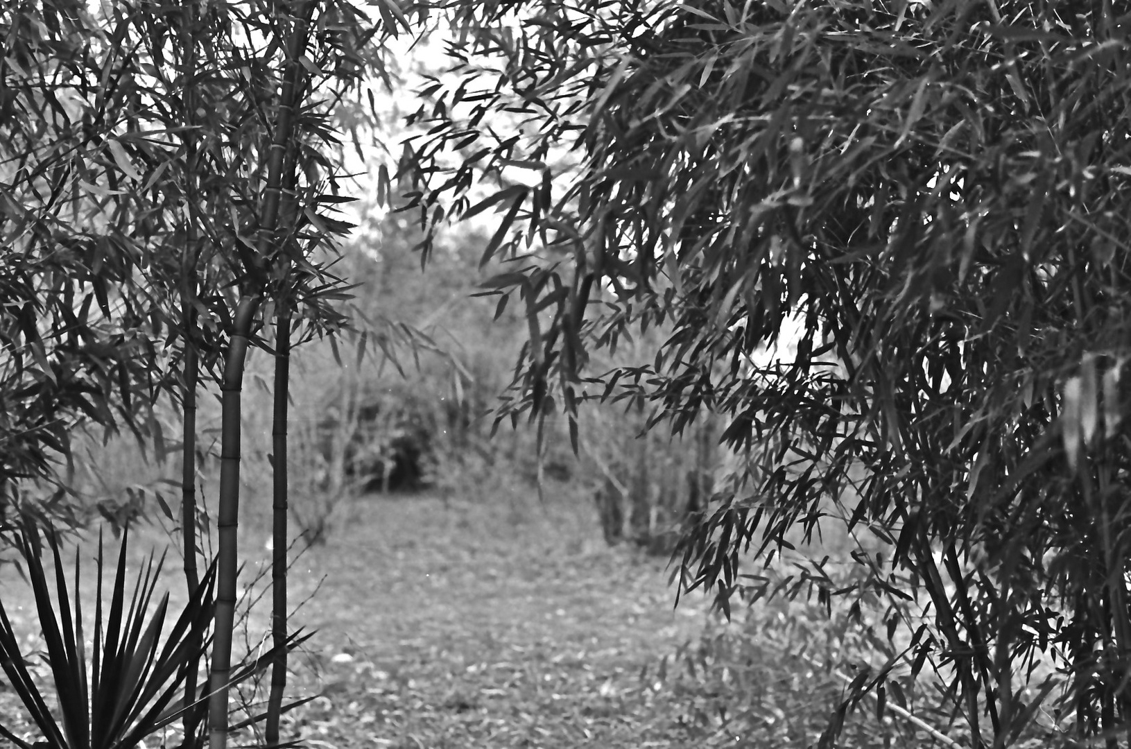 bamboo and yucca